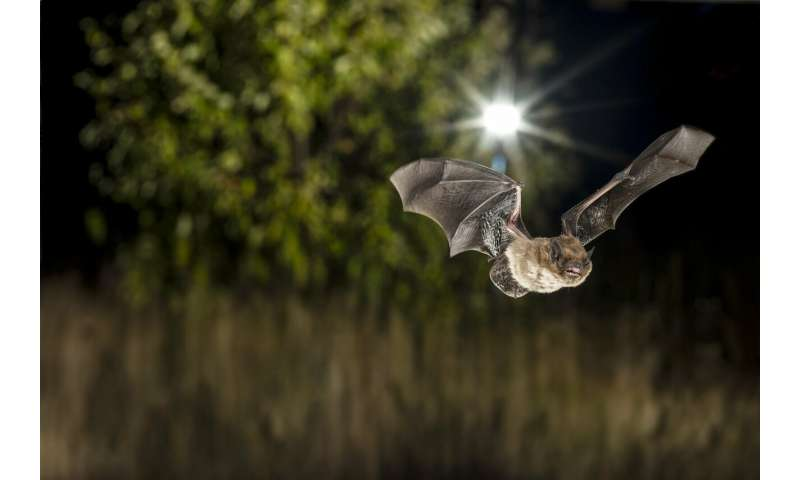 How light from street lamps and trees influence the activity of urban bats