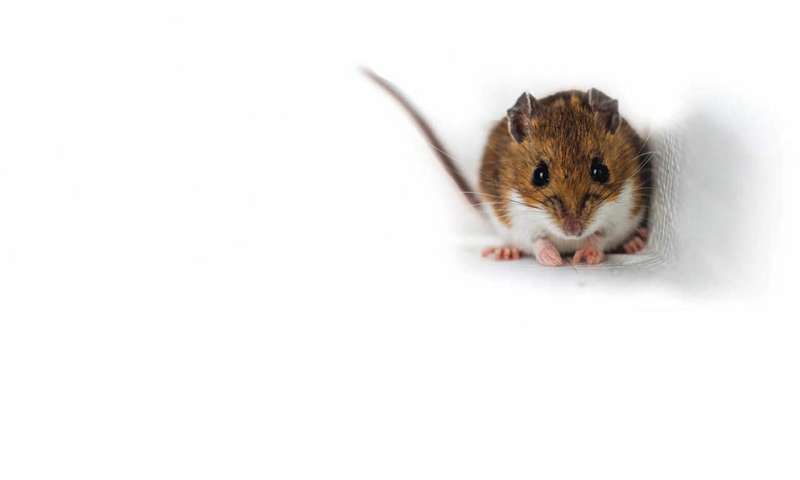 **How personalities of wild small mammals affect forest structure