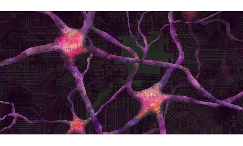 How the Brain Learns New Skills