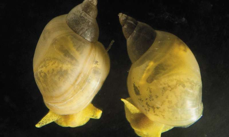How the snail's shell got its coil