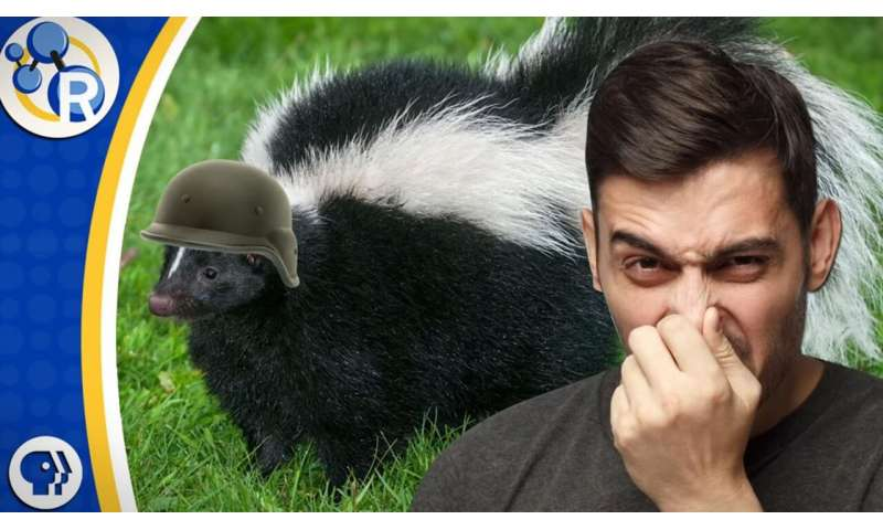How to get rid of that skunk smell? (video)