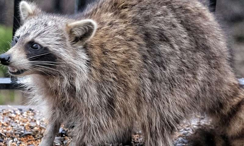 How to handle wildlife in your yard
