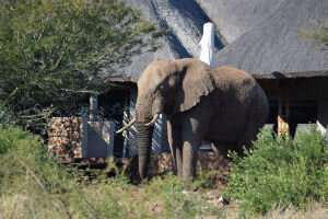 Humans 'must be better neighbours' to save elephants