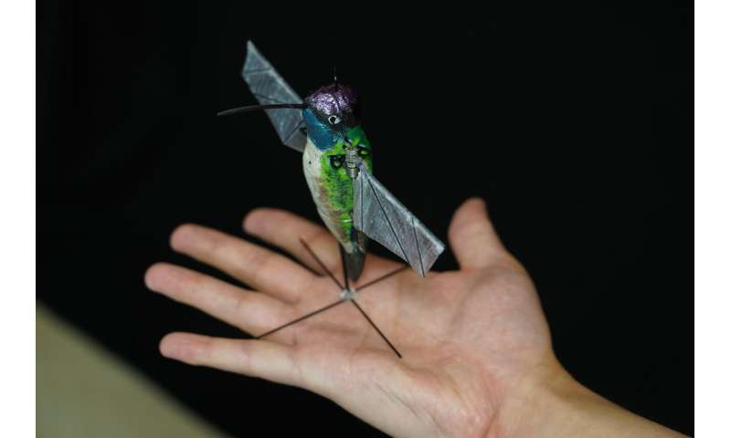 Hummingbird robot uses AI to soon go where drones can't