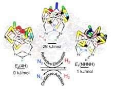 Illuminating how nitrogenase makes ammonia