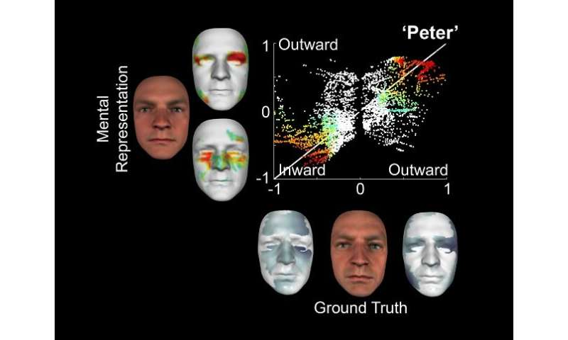 In a world first, neuroscientists have been able to construct 3-D facial models using information stored in the