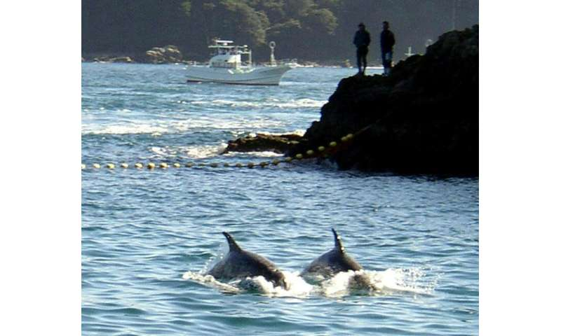 9b87100d Activists file suit to stop dolphin hunting in Japan