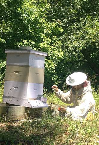 In hives, graduating to forager a requirement for social membership