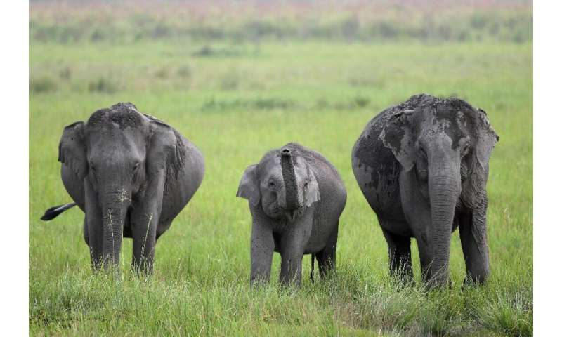 In rainy season the grass reaches head-height, providing perfect cover for poachers and flooding forces the animals to move to h