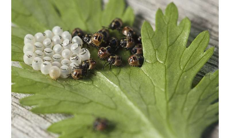 Know garden pests before deciding on a path to control