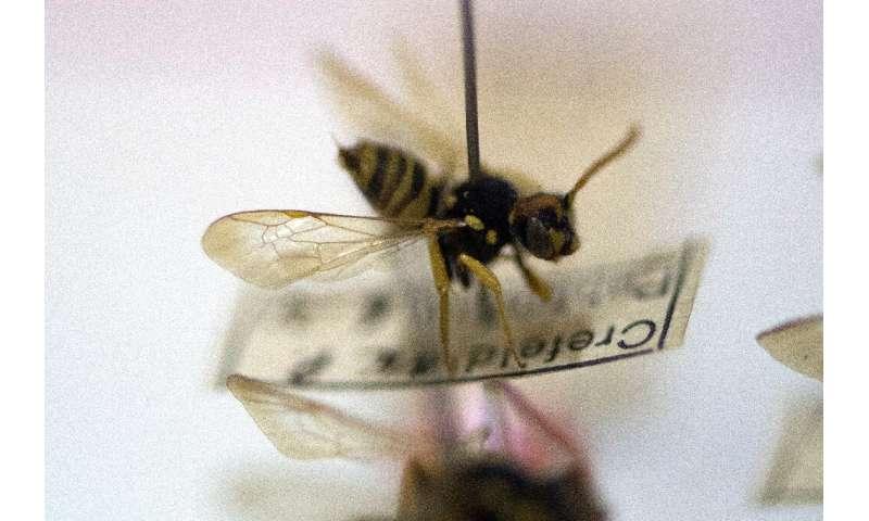 Insect apocalypse: German bug watchers sound alarm
