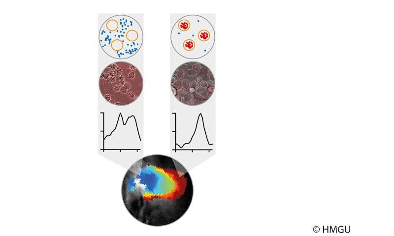 Inside a tumor: Purple bacteria visualize 'big eaters'