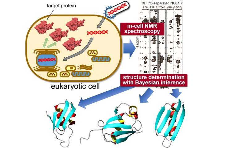 In-situ measurement of 3D protein structure inside living eukaryotic cells