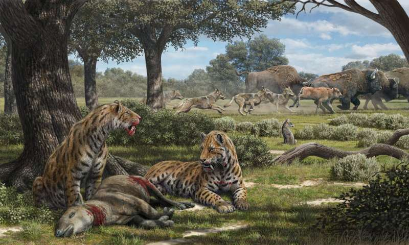 Intense look at La Brea Tar Pits explains why we have coyotes, not saber-toothed cats