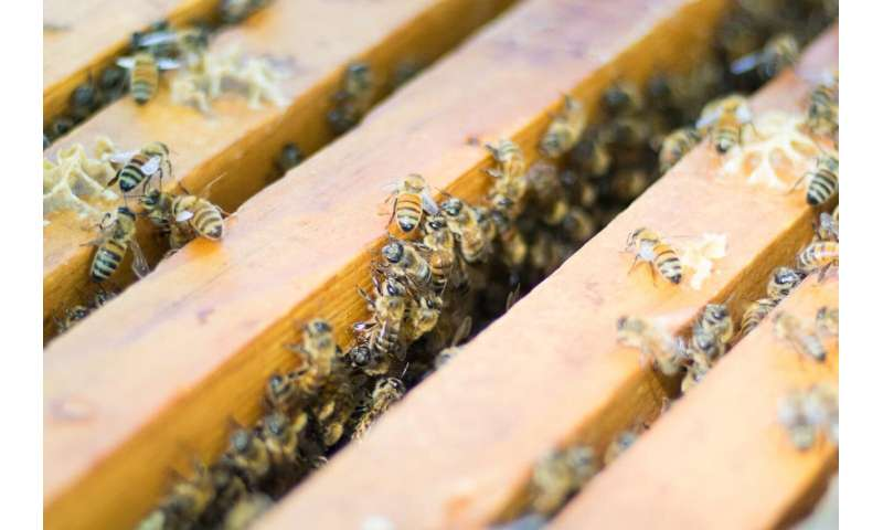 & # 39; Intensive & # 39; Beekeeping not responsible for common bee diseases