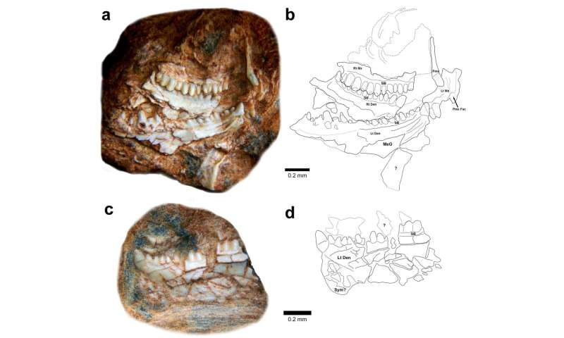 A new sphenodontian from Brazil is the oldest record of the group in Gondwana