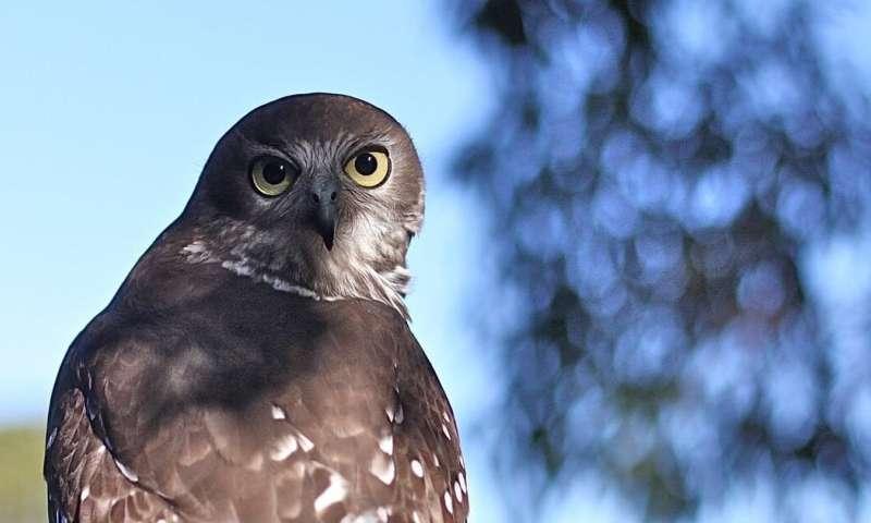 Invasive species are Australia's number-one extinction threat