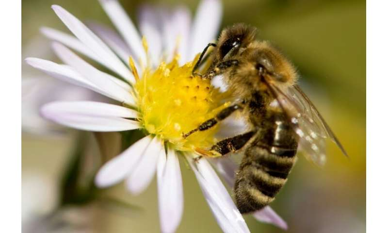 It has become increasingly customary in the French capital for bee hives to be introduced at seemingly unlikely locations, inclu