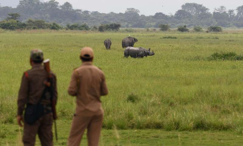 Kaziranga National Park is home to rhinos, elephants, and tigers—all under threat from poachers