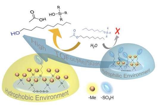Key evidence associating hydrophobicity with effective acid catalysis