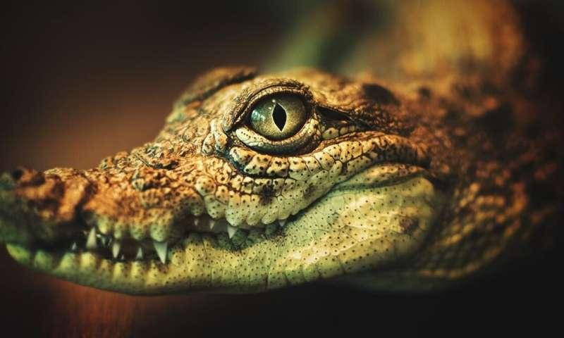 Krokodil, the Russian 'flesh-eating' drug, makes a rare appearance