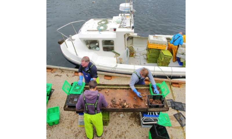 Lack of trust muddies the water in UK fishing industry