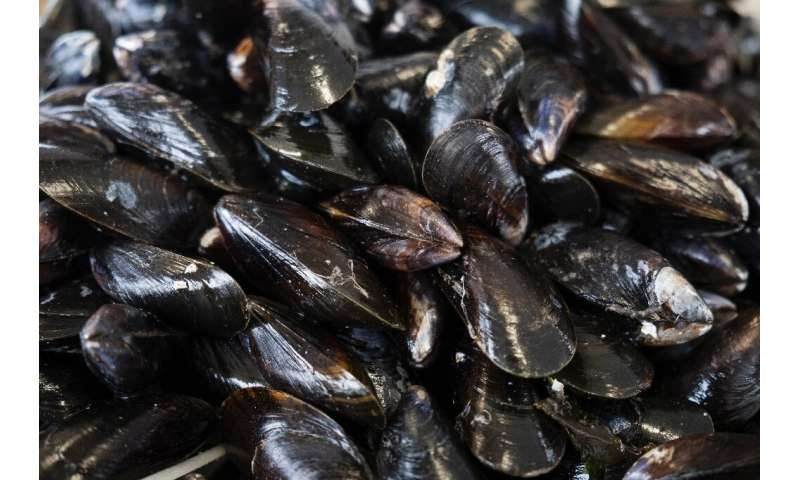 Mussels, 'super-filters' that can help beat water pollution