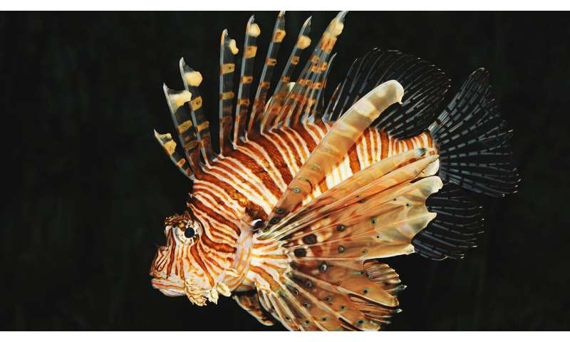 Lionfish genes studied for clues to invasive prowess