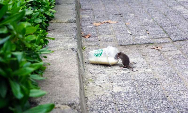 Living with rats involves understanding the city as an ecosystem
