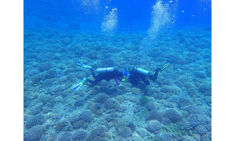 Localized efforts to save coral reefs won't be enough, study suggests