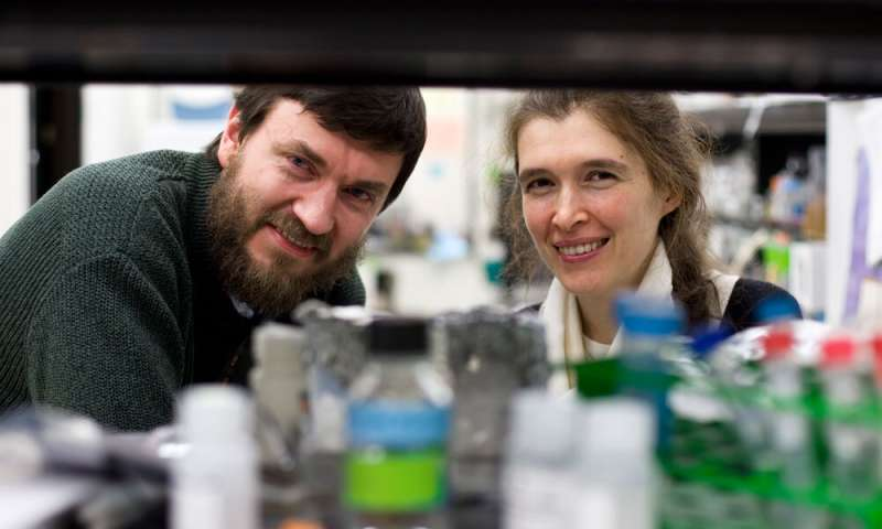 'Longevity gene' responsible for more efficient DNA repair