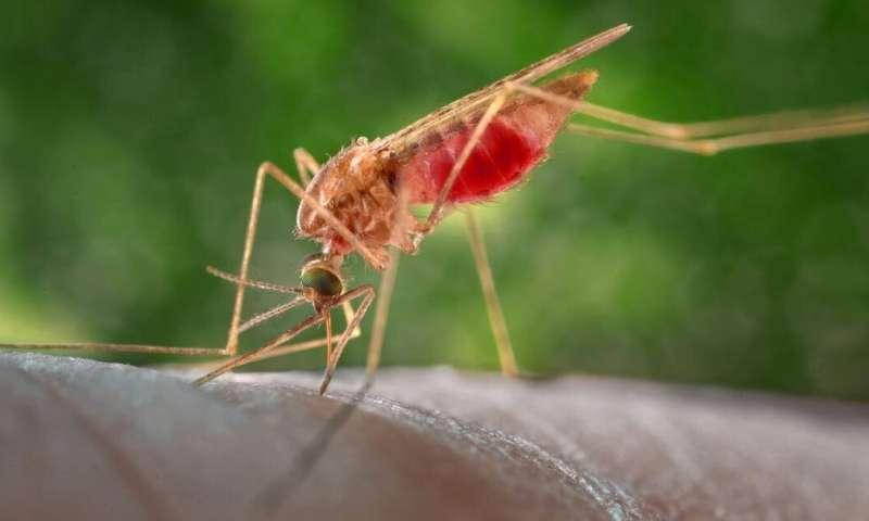 """Résultat de recherche d'images pour """"malaria, Africa, malaria, aids, new drugs"""""""