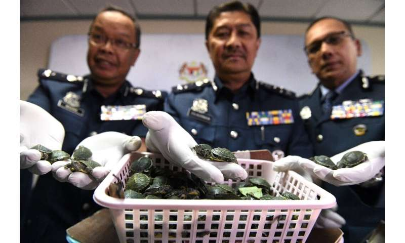 Malaysian airport officials found 5,255 terrapins packed into  two suitcases