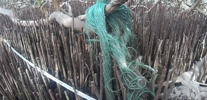 Mangrove Plastic Filters