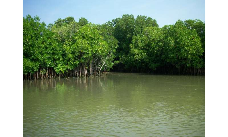 Mapping the world's 'blue carbon' hot spots in coastal mangrove forests