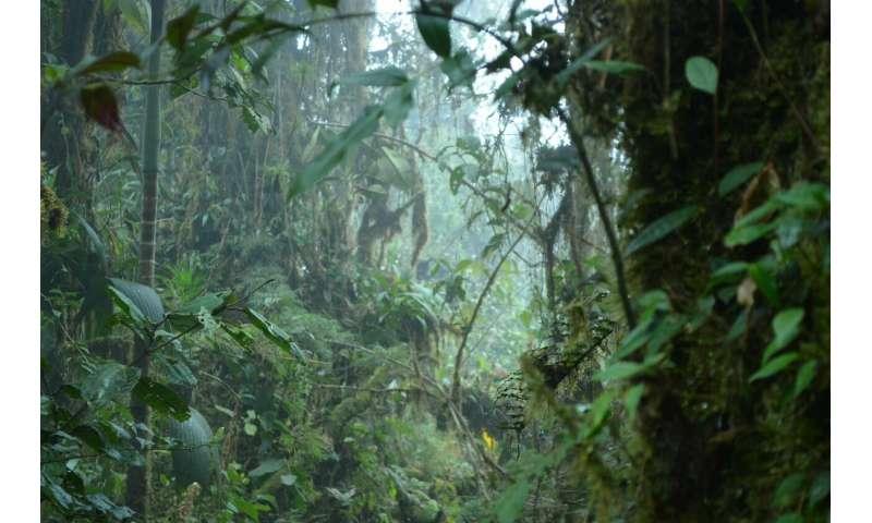 Mega experiment shows species interact more towards tropics and lowlands