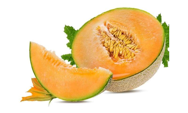Melons are powerhouses in taste, nutrition