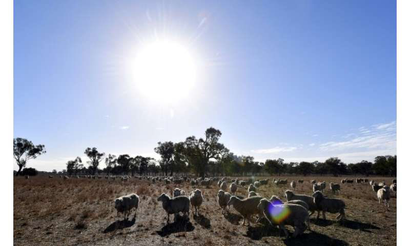Meteorologists say weather patterns over the Indian and Pacific oceans have contributed to recent higher temperatures, but that