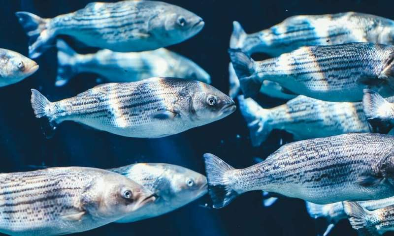 Microbes that live in fishes' slimy mucus coating could lead chemists to new antibiotic drugs