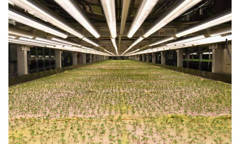 Micro greens—tiny seedlings of plants such as fennel, radish or coriander usually harvested when they are full size—are already