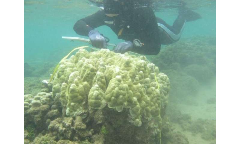 Mānoa: Are Hawaiian corals adjusting to warmer temperatures?