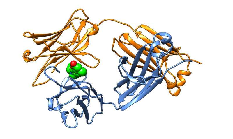 Molecules that curb errant proteins of AL amyloidosis point to new type of therapy