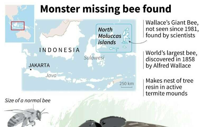 Monster missing bee found