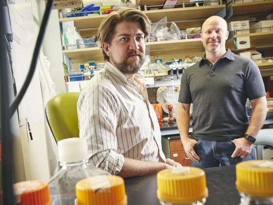 Montana State research shows gut microbiome protects against acute arsenic toxicity