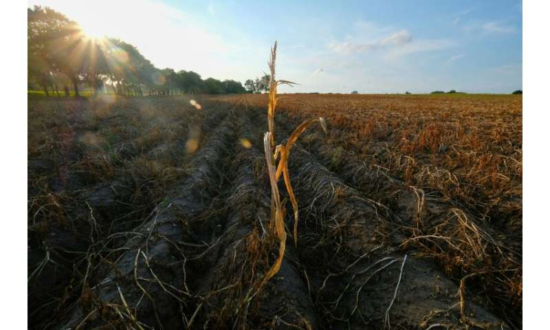 Months of scarce rainfall and hot sunny weather last year had wreaked havoc on crops in Germany