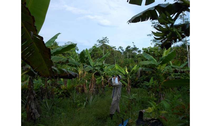 Smallholder agriculture is threatening the western Amazon