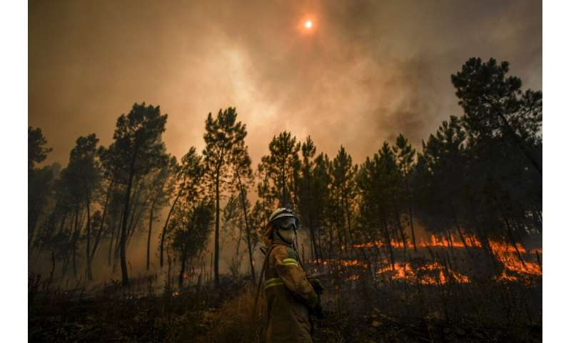 Portugal's firefighters gain upper hand in forest blazes