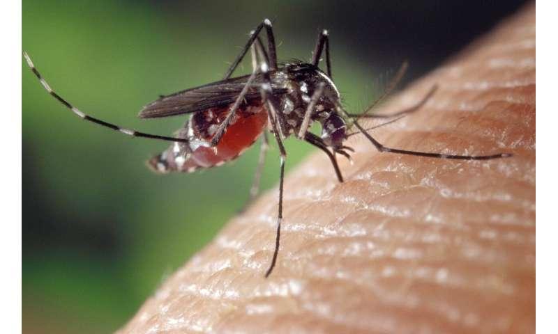 les moustiques  Est-ce que plus de pluie signifie plus de risque de maladies transmises par les moustiques? mosquitos