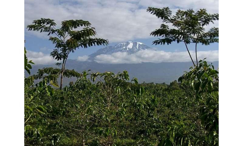 Mount Kilimanjaro: Ecosystems in global change