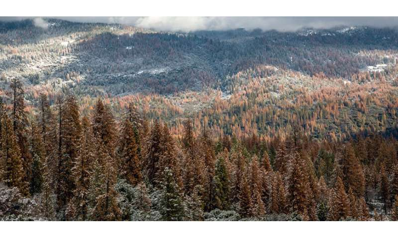 Multi-year drought caused massive forest die-off in Sierra Nevada